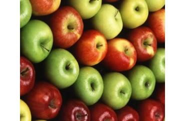 Elma Soğuk Hava Depoları